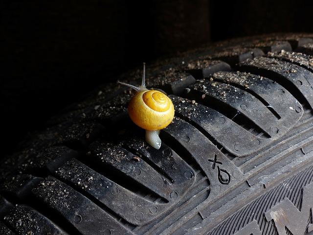 hlemýžď na pneumatice.jpg